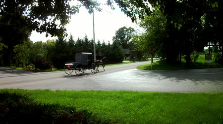 Amish Transportation Type Horse and Buggy Pick Up