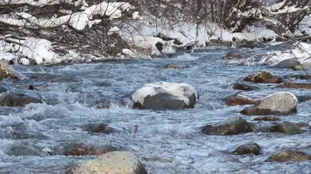 margem do rio : River in snowy forest
