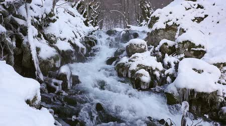 wilderness : River in snowy forest