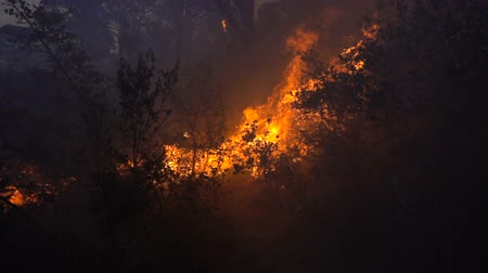 kartáč : Fire storm in the forest at dusk