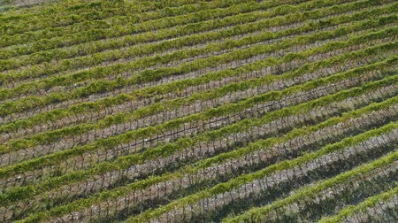 field survey : Aerial view of the vineyards fields