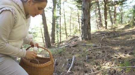 корзина : Mushrooming, woman picking mushrooms in the forest