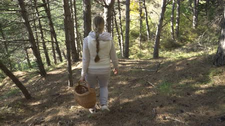 cesta : Mushrooming, woman picking mushrooms in the forest