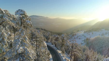 boomtoppen : flight over the road through the snowy forest at sunrise Stockvideo