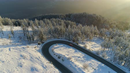 snow covered spruce : flight over the road through the snowy forest at sunrise Stock Footage