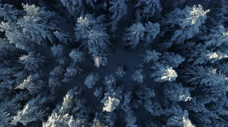 közvetlenül : aerial view of the snow-covered spruce forest Stock mozgókép