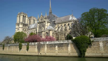 local de interesse : Notre Dame Cathedral surrounded by flowering trees Stock Footage