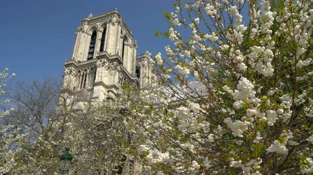 cite : Notre Dame Cathedral surrounded by flowering trees Stock Footage