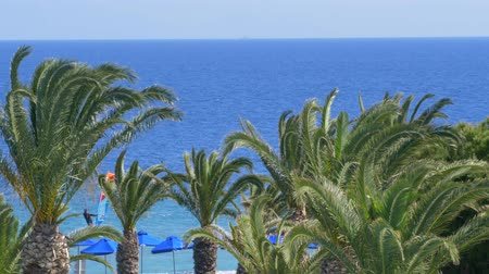 krete : Beautiful tropical mediterian coastline with palm trees and clear blue water slow motion wind