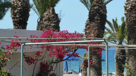 hibiscus : Beautiful colourfull blossom flowers in Greek Island