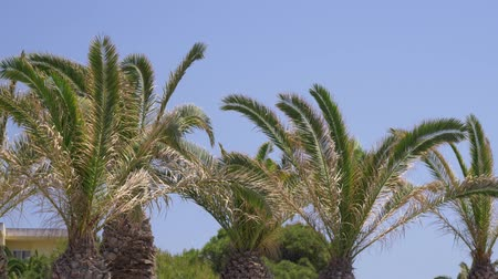 krete : Beautiful Mediterranean coastline with windy palm trees and clear blue water Europe Stock Footage