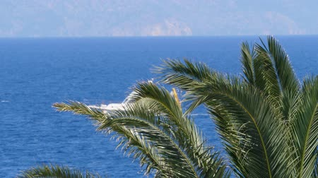 rhodes : View thru palm trees Ship sailing close to Turkey coast view from the Greece