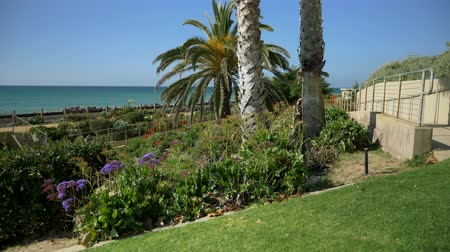 megye : Scenic Beautiful view thru flowers green plants agave aloe vera San Clemente Pier in Linda Lane Park West Coast California sunny day railways road and waves long flat