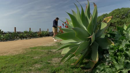 A handsome, young guy, a man in a navy blue shirt with and shorts is walking along in California coast San clemente Linda Lane park. Low angle thru green plants