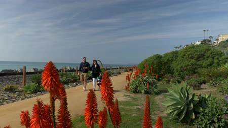 megye : Happy Couple Enjoying Beautiful Day Walking holding hands on the Beach. Travel Vacation Retirement Lifestyle Concept California Orange county San clemente thru red flowers