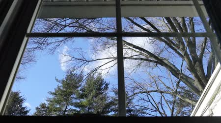 View from window big tree and blue sky.