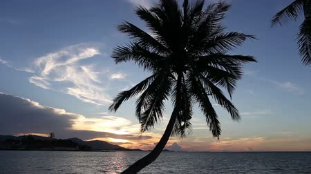 Beautiful silhouette coconut palm tree with airplane flying acorss sky with sunset. Wideo