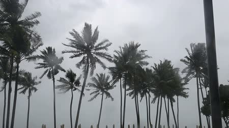Palms tree at monsoon in tropical island . Wideo