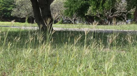 Shoots of a young green grass in the park.