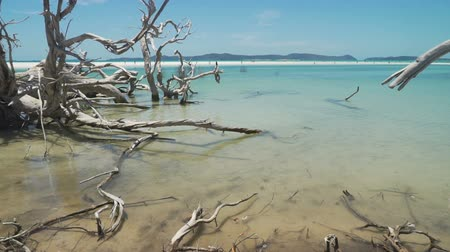 Dead tree in the sea, with turquoise sea water in Australia