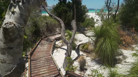wooden bridge : Wooden boardwalk in whitehaven beach in Australia