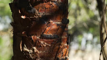 кора : Ants walking and climbing on a tree in Australia