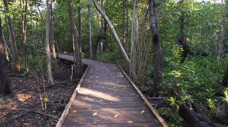 mangue : Walking on Mangrove boardwalk in Cape Hillsborough park, Australia