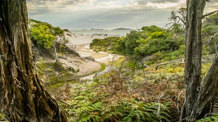 promontory : Squeaky beach seen from the forest in Wilsons prom in Australia