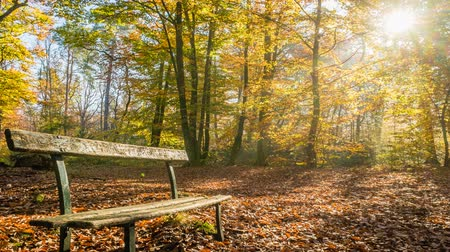 dżungla : Bench in Fontainebleau forest in autumn, zoom in