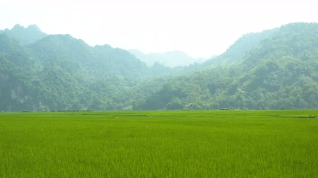 Beautiful Green Paddy Field with Mountain Landscape around Babe lake, Vietnam Stok Video