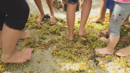 stomping : School kids learning how to make wine by stepping on top of grapes.