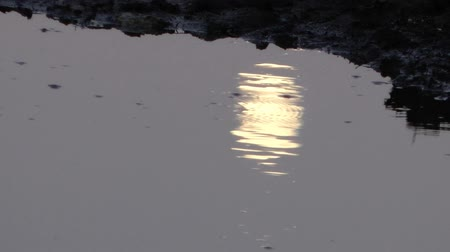 horizonte sobre a água : Moonlight reflection ripples on a water Stock Footage