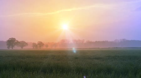 луг : Early Morning Misty Sunrise over fields of wheat Стоковые видеозаписи