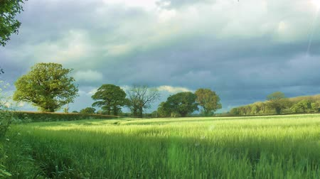 устойчивость : Countryside Landscape with Green Field and trees in the background Стоковые видеозаписи