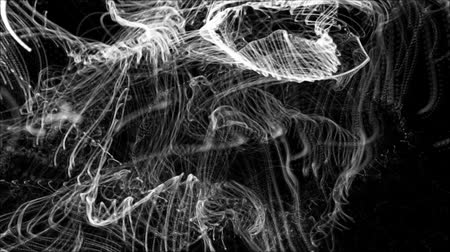 oblouky : white particle fibers black background - dancing particle stream abstract motion backgrounds