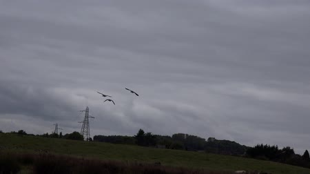 kanada : Geese In Flight Nature Background