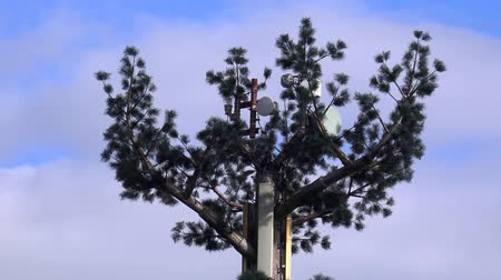 disguised : cell phone tower disguised as a tree Stock Footage
