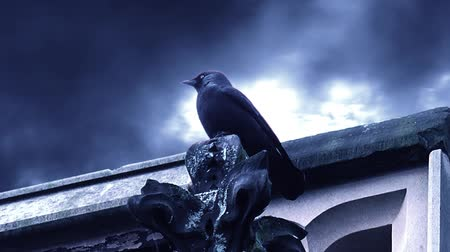 fantasia : Dark Fantasy Horror Raven Perched On Tower