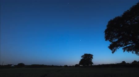 wipe away : nightime star trails against silhouette of oak trees