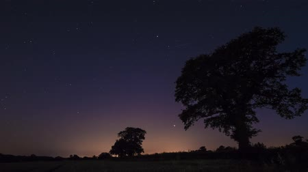 wipe away : night time star trails against silhouette of oak trees