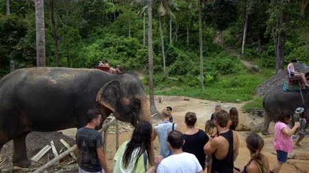 surat : Tourist visiting and riding elephant in Koh Phangan, Surat Thani, Thailand in July 2017