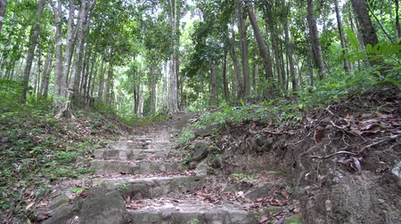 Stairs in tropical forest, national park in Koh phangan, Thailand