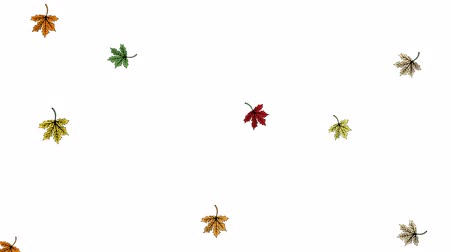 2d animation, leafs falling on white background, Autumn concept