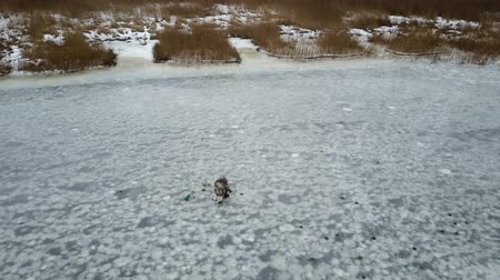 Aerial view on fisherman at a frozen river in Riga, Latvia. 4k footage. Filmati Stock
