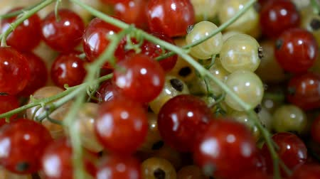 смородина : Red Currant close up right rotating