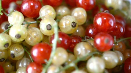 смородина : red currants, right rotated plate, close up Стоковые видеозаписи
