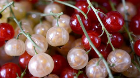 смородина : red currants slow motion hd footage Стоковые видеозаписи