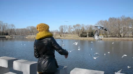 влажность : feeding seagulls in the city pond hd stock footage