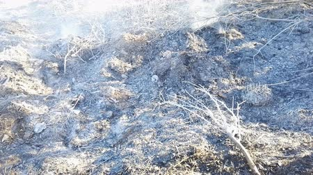 bush fire : ash on the ground and smoke after a forest fire hd stock footage