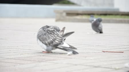 chodník : The Pigeons in a city